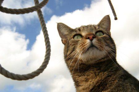 On board cat