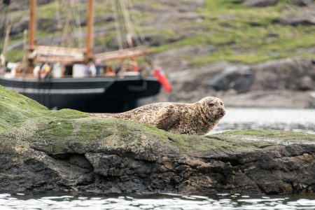 Seal on a rock