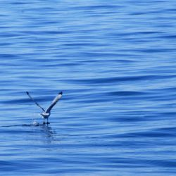 Seabird taking flight
