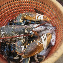 Scilly lobsters